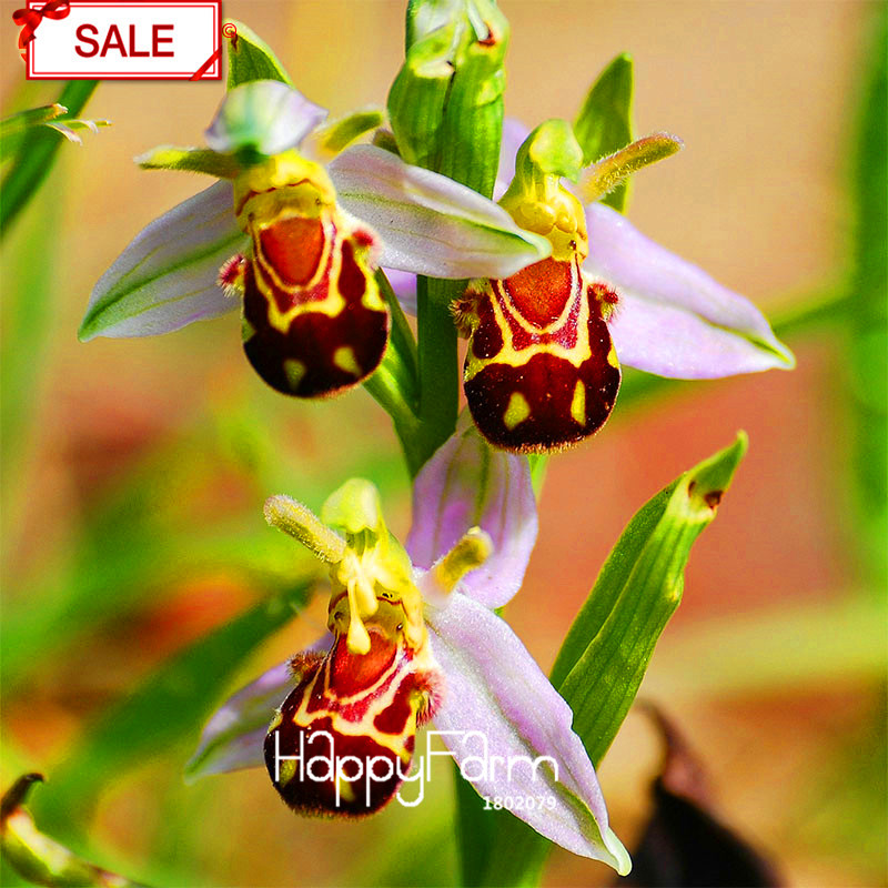 Online Buy Wholesale Orchids For Sale From China Orchids