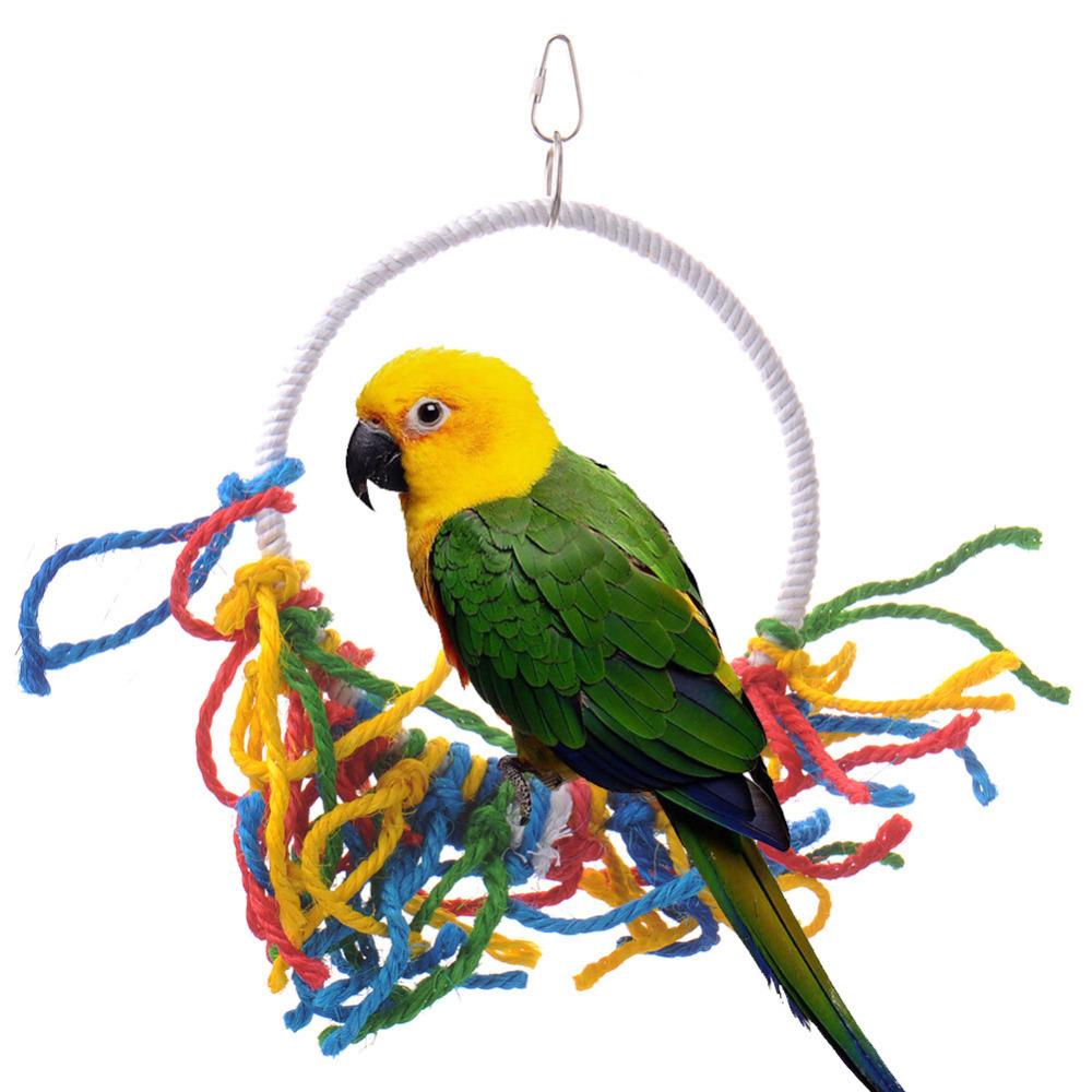 Essay pet bird parrot
