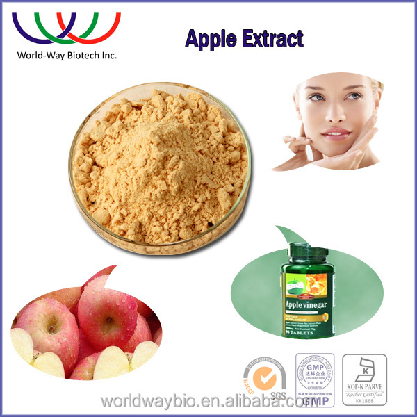 Free samples Anti-oxidant apple root bark extract 90%-98%