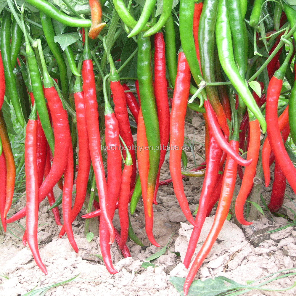 Touchhealthy supply Easy to <strong>plant</strong>,High yield,350-600 kg dried <strong>pepper</strong> per mu chili <strong>seeds</strong>