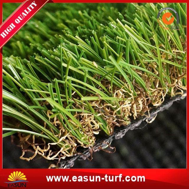 трава солонец фото