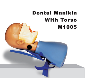 Dental Manikin with torso/dental training simulator with phamtom head