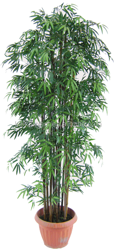 Top Selling Chinese Bamboo Plant For Decoration Buy Chinese Bamboo