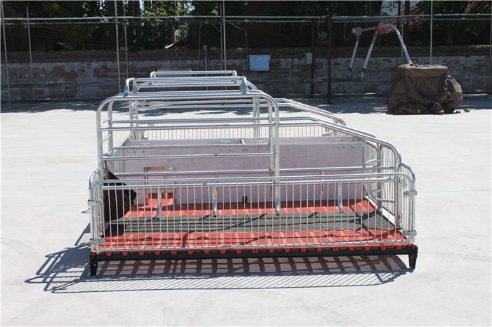 Goldenest High quality cheap price automatic farrowing crate for pigs sow sty farming equipment for sale