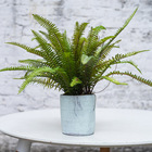 Plant Pots Artificial Plant Plastic Tree Fern With Straight Cemented Pots