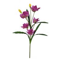 home decoration vanda orchids plants for sale
