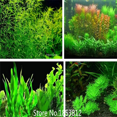 aquarium plants seeds - 20 kinds Aquarium Grass Seeds Water