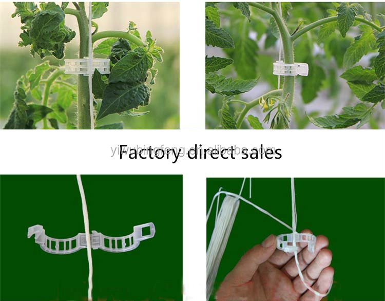 Low Piece Tomato Clear Plastic Plant Support Clips For Fruit And Vegetables
