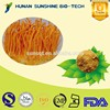 High quality Cordyceps sinensis extracts / Worm Grass Extract / cordyceps militaris