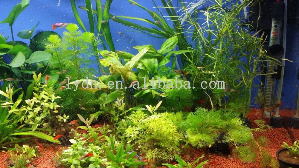 aquarium accessories for aquarium live plants in fish tank