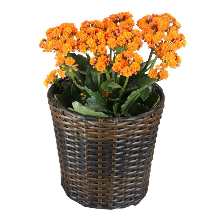 semicircular glue plastic rattan flower planters buy large plastic planters plastic planter. Black Bedroom Furniture Sets. Home Design Ideas