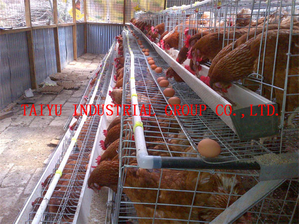 Taiyu Best Sale Chicken Egg Layer Cages System Buy
