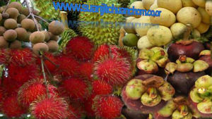 Rambutan Tropical Fruit, Rambutan Tropical Fruit Suppliers