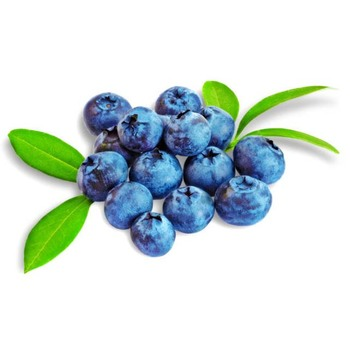 High Quality Frozen Fresh Blueberries - Buy High Quality Frozen Fresh  Blueberries,High Quality Frozen Fresh Blueberries,High Quality Frozen Fresh