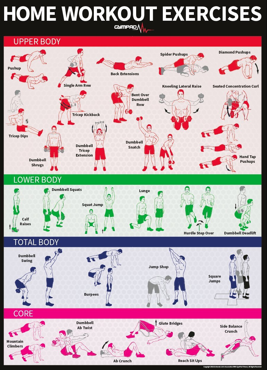 Buy Dumbbell Workout Exercise Poster - NOW LAMINATED - Strength Training Chart - Build Muscle