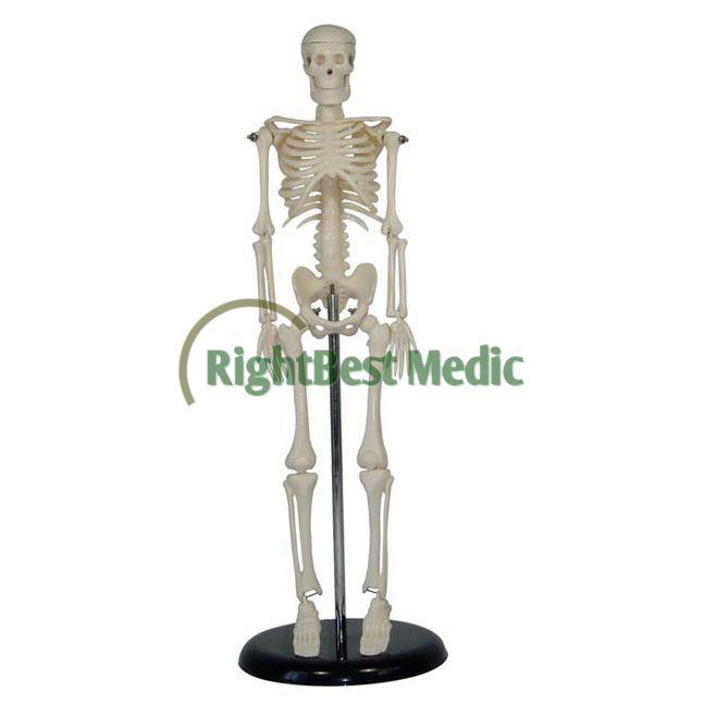 Kerangkakemasan: Mini Plastik Buatan Manusia Tengkorak Model Anatomi