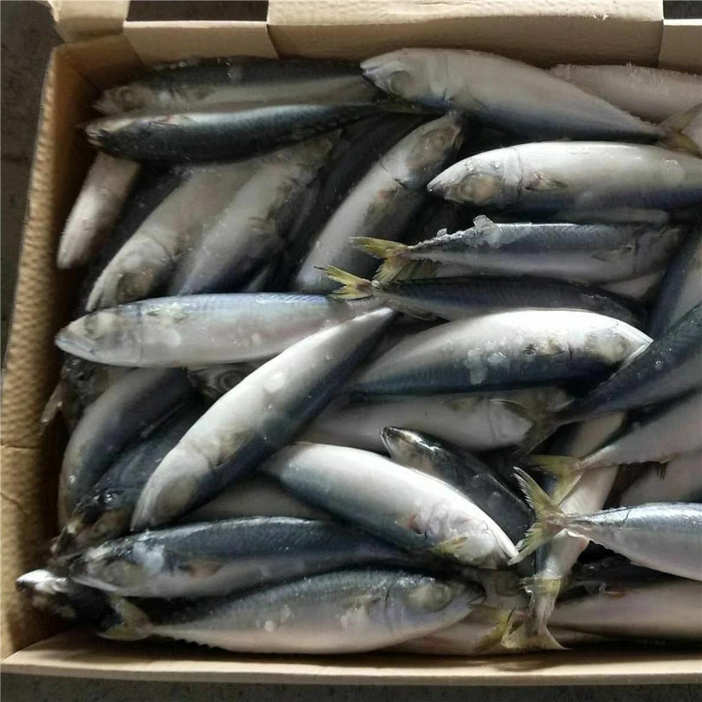 Mackerel tin fish fresh catch mackerel in pouch fish meal