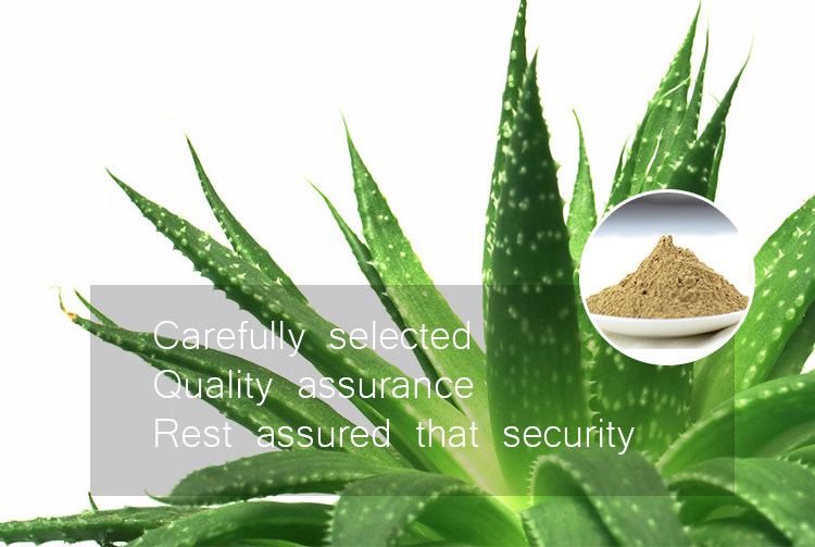 Factory supply 100% Natural aloe vera plant extract powder