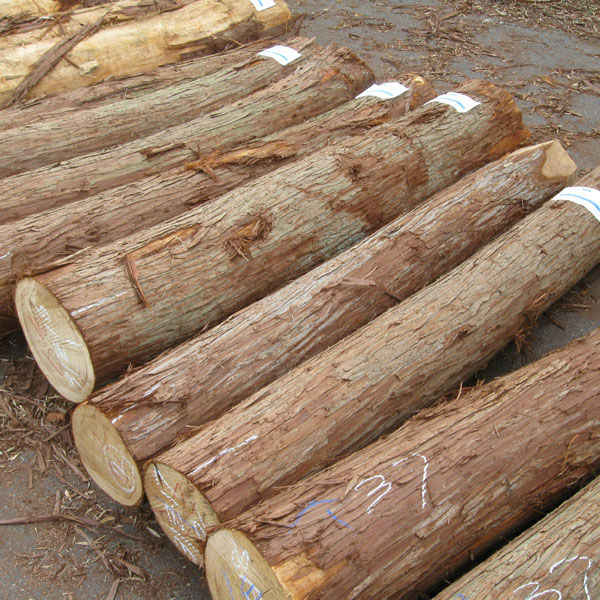 Source Hinoki Japanese Cypress Butt Logs On M Alibaba Com