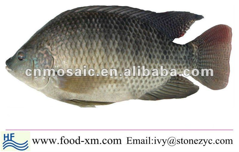 Chinese Cheap & Fresh Whole Tilapia Fish For Sall
