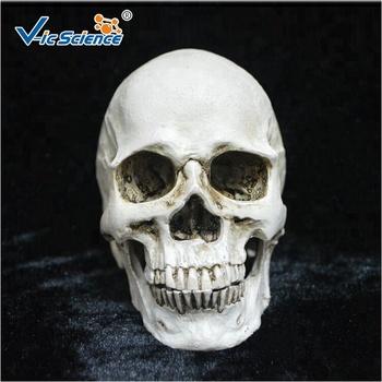 Hot Wholesale Plastic Halloween Skull Made In China Plastic Skulls For Sale