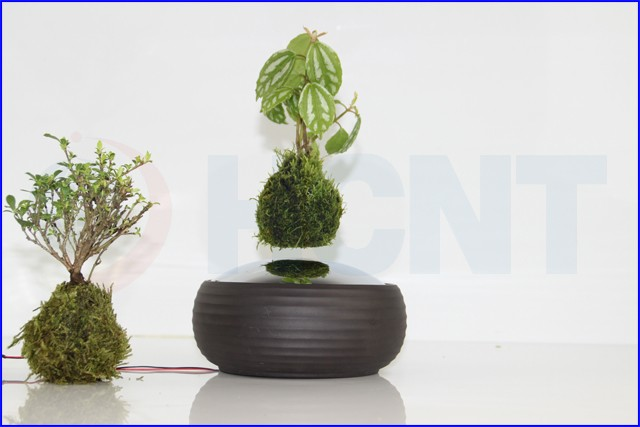 Chinese manufacturer air levitating potted plant bonsai for Floating plant pots