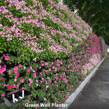 Grüner Wand Garten Plastiktopf Pflanzer Winkelwand Blumentopf