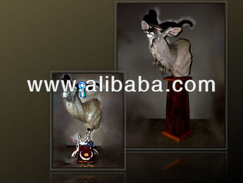 taxidermie fourniture