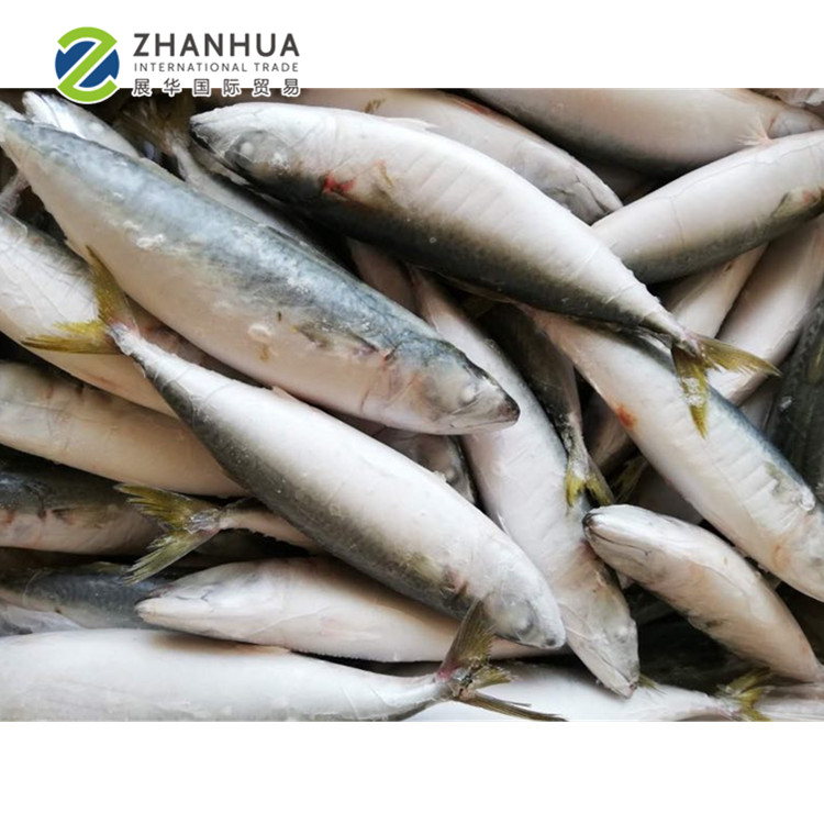 Frozen Seafood Importers of Frozen Mackerel,Pacific Mackerel on sale