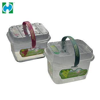 Square Shape Design Disposable Plastic Box Fruit Salad Packaging With Handle