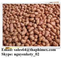 Groundnuts Kernel from Vietnam