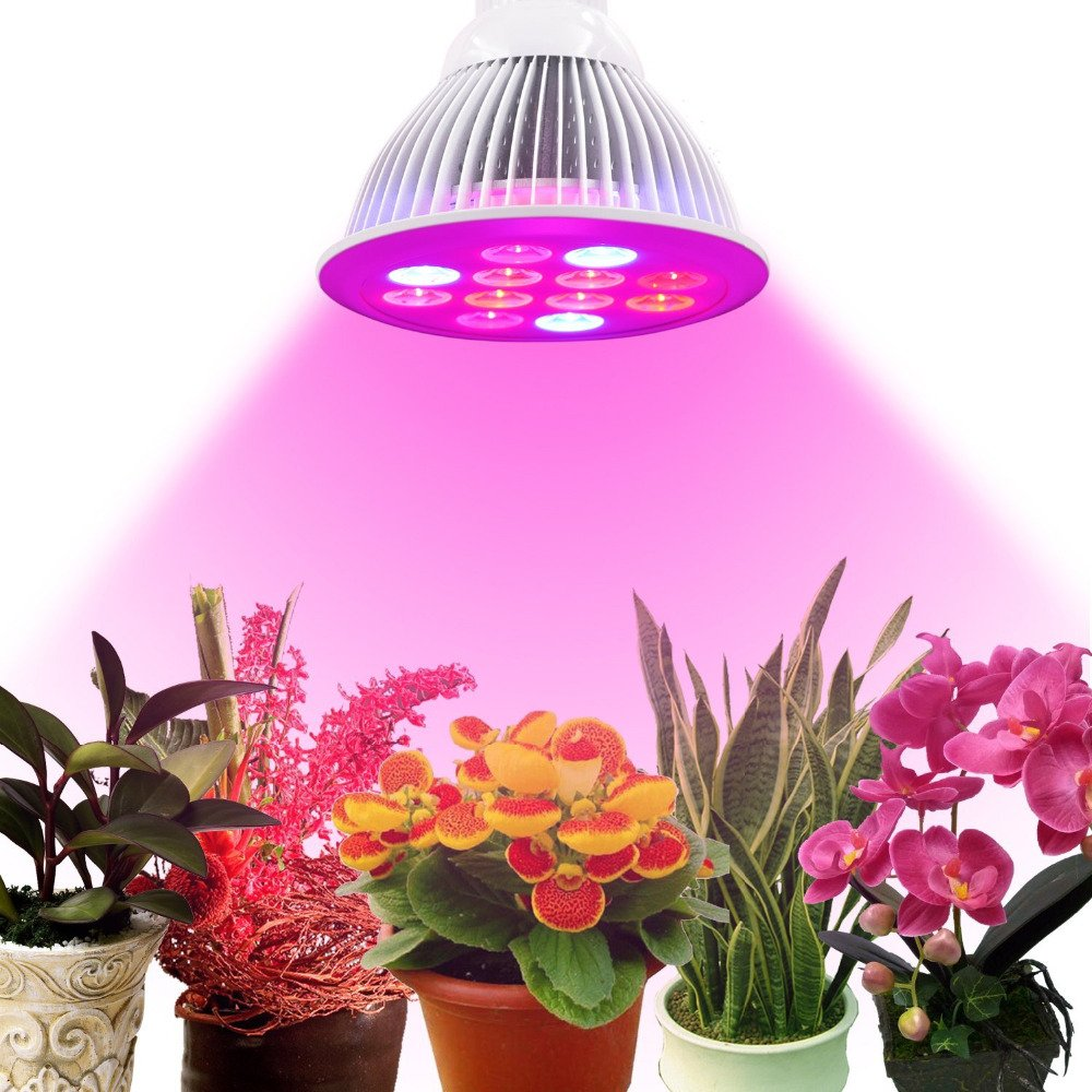 Cheap blue rose plants for sale find blue rose plants for sale get quotations rayway 12w full spectrum high efficient led grow light bulb 6 red 3 blue 3 rose izmirmasajfo