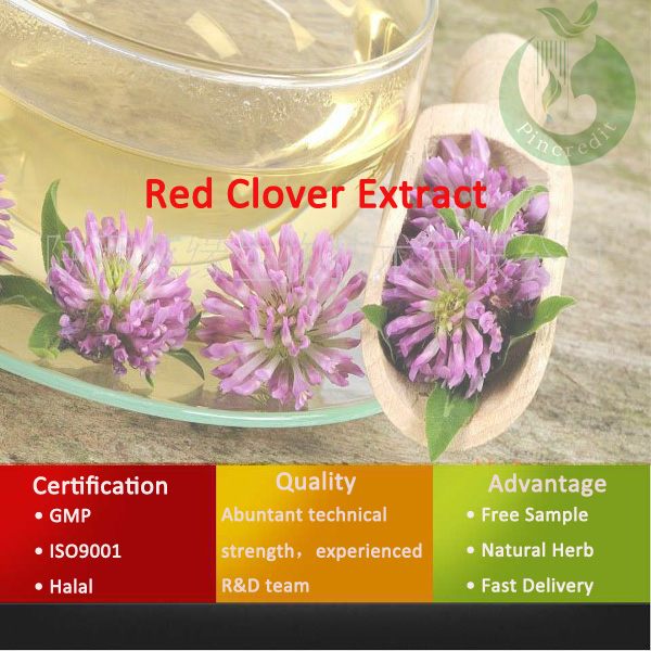 Red Clover Extract / Isoflavones/Red Clover Herbs