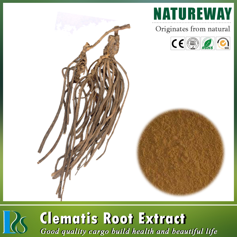 One touch express manufacturer Chinese Clematis Root Powder Radix Clematidis L.