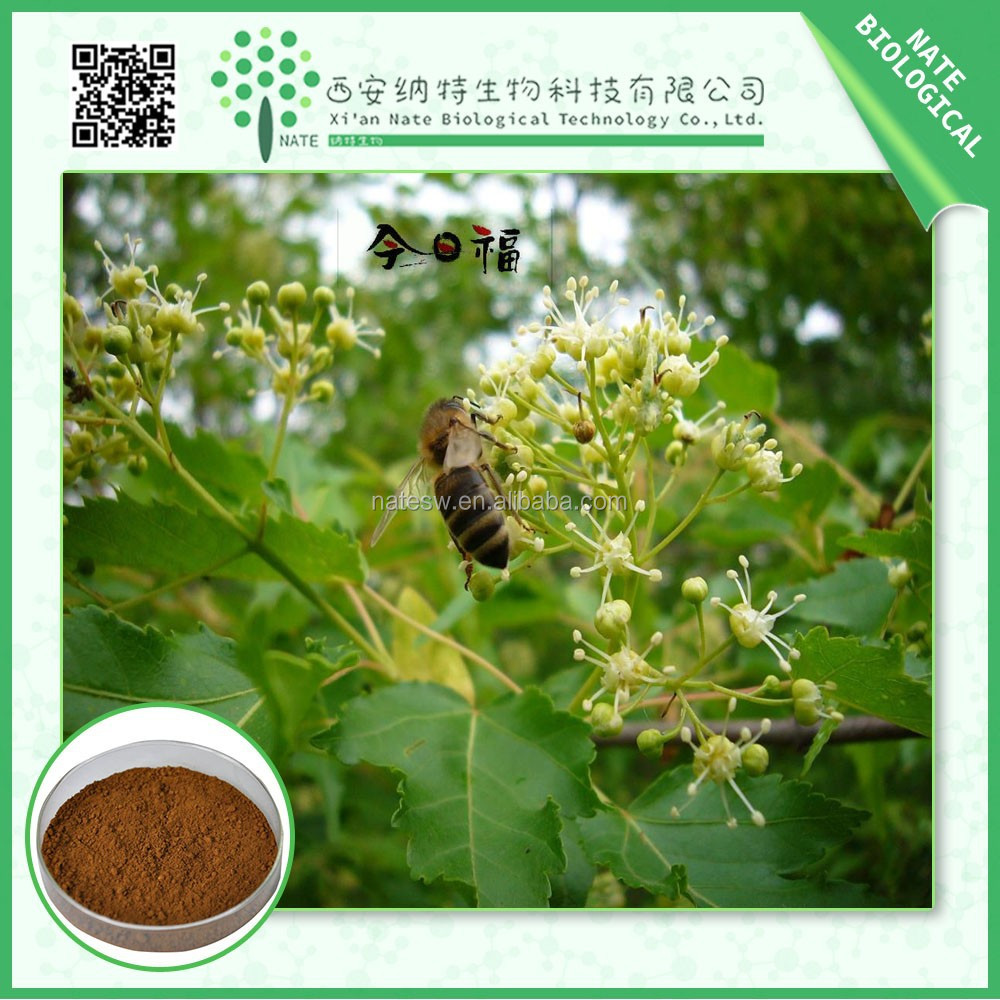Hot sales product Linden flower extract linden flower powder manufactures