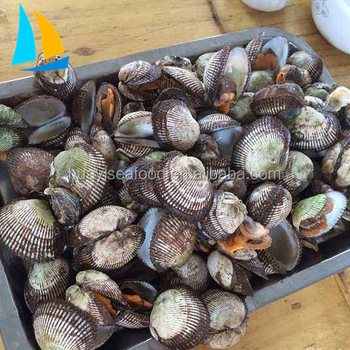 Frozen Cooking Baby Clam Meat And Frozen Blood Clam For Sale - Buy Frozen  Ark Shell,Blood Cockle,Clam Meat For Sale Product on Alibaba com