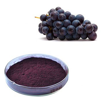 hot sale black currant extract powder 20% anthocyandins