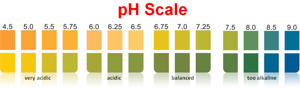Ph Test PaperPh Test Strip  New Color Chart  Buy Ph