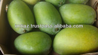 Global GAP Certified White Chaunsa Mango 100% Traceable