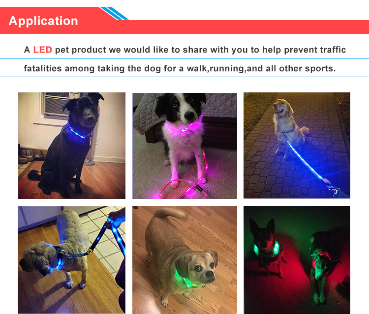 Wholesale China Supplier USB Rechargeable LED Dog Collar