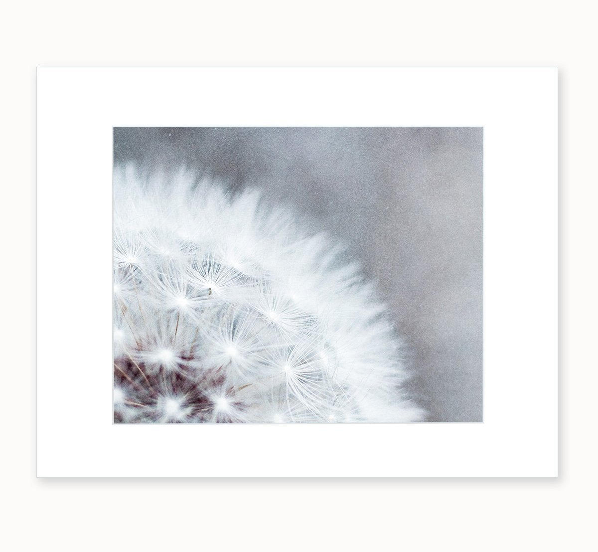 Grey Neutral Colors Botanical Wall Art, Dandelion Floral Photography, Wild Flower Nature Decor, 8x10 Matted Photo Print, (fits 11x14 frame) 'Dandelion Queen'