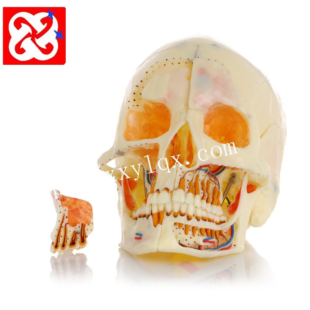 Venta al por mayor dientes de los humanos-Compre online los mejores ...