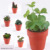 Assorted Artificial Potted Plants Succulent On Paper Pot