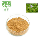 20% HPLC Herb medicine bacopa monniera extract powder, bacopa monnieri extract