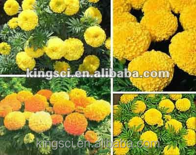 Honghao New batch 5%-98% HPLC marigold flower extract lutein