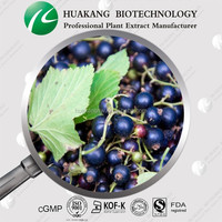 Black Currant Extract Powder/Ribes nigrum L.with Anthocyanidins