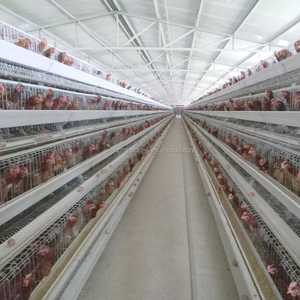 Poultry farm chicken layer cage for Malaysia