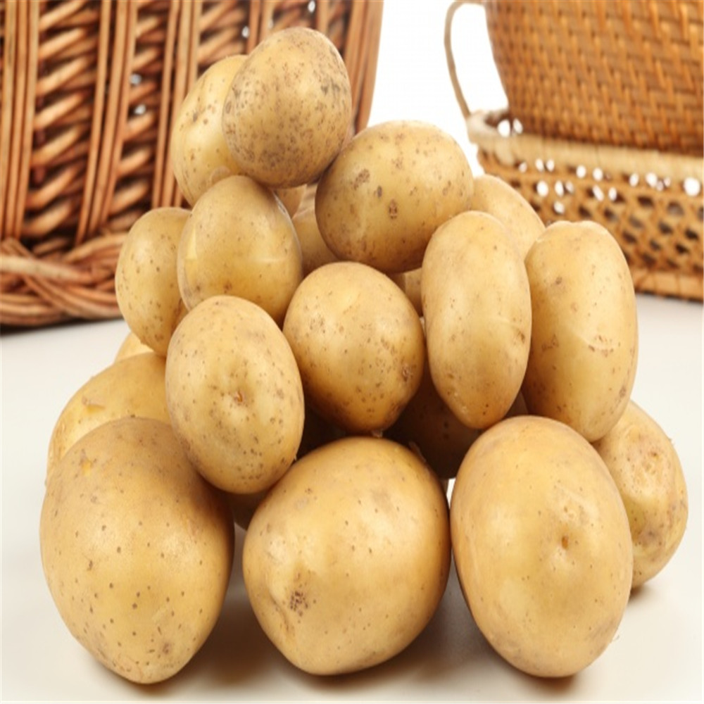 wholesale fresh potato from China/potato supplier/potato exporter