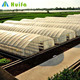 Agriculture Farm Single Span Plastic Sheeting Green house for sale