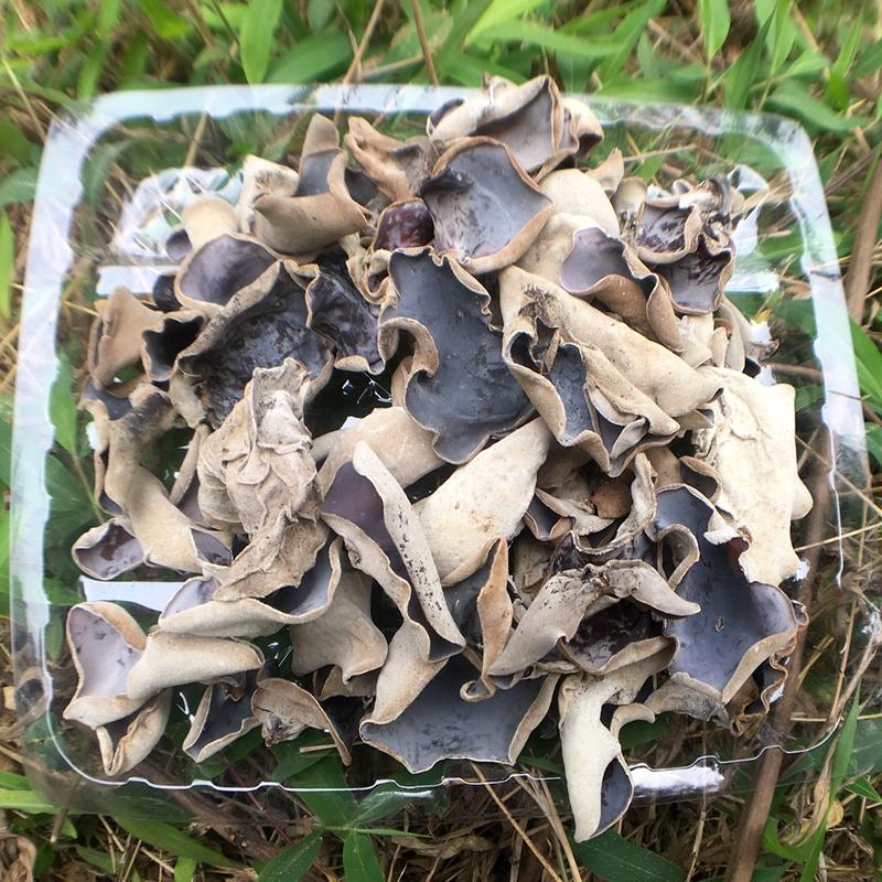Detan Dried White Back Agaric/black Fungus Magic Mushrooms Dried For Sale